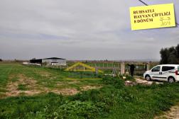Satılık Hayvan Çiftliği Ruhsatlı Projeli Didim Akyeniköyde