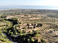 Doğanbey Köyü Satılık Deniz Manzaralı 9 Dönüm Zeytinlik